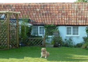 Dog friendly accommodation in Dorset