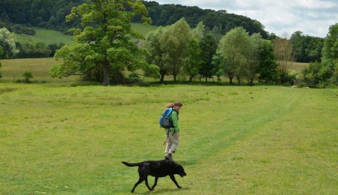 Dog walking in Gloucestershire