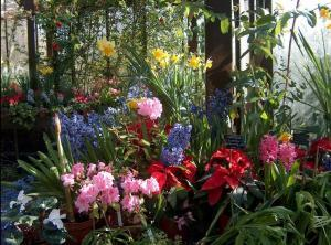 A colourful display at the Botanic Gardens