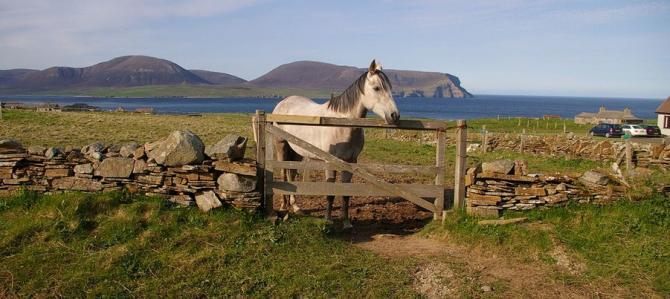 Horse in the Orkneys