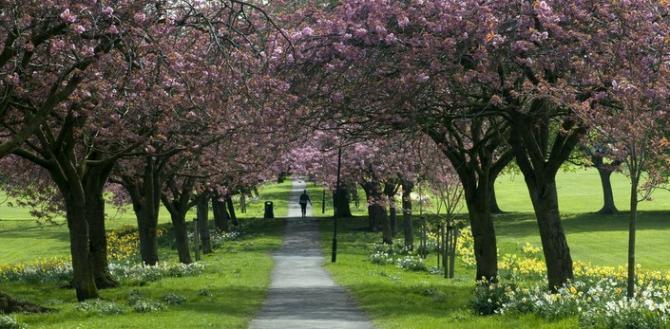 The Stray, Harrogate