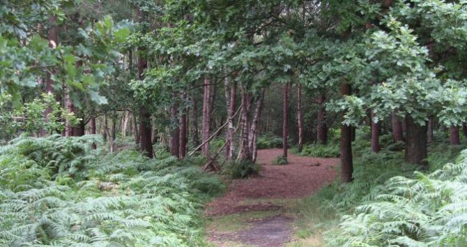 Footpath walks direct from the main Forest Centre