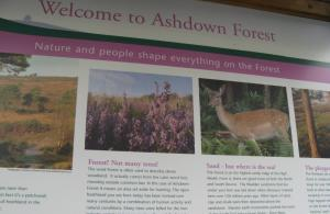 Exhibition with the main Forest Centre