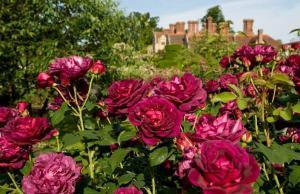 Rose Garden at Borde Hill
