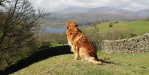Where shall we walk first ... VIP Pooch Packages in Dog Friendly Windermere Hotels