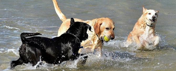 Pet friendly Newquay Cottages - on Dog Friendly Crantock Beach!