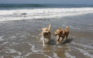 Paws on the Shores in Tenby & the Pembrokeshire Coast!