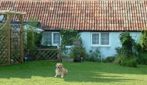 Dorset has 100s of Pet Friendly Cottages!
