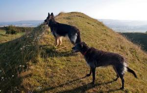 Inland Dorset Walks with Dogs - Hambledon Hill Nature Reserve
