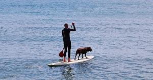 Paddle Surfing with dogs on the Isle of Wight