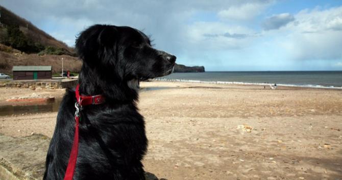 Coastal walking & beaches on the Heritage Coast around Whitby