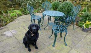 Pet Friendly Cottages with enclosed gardens