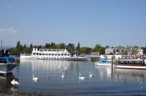 Dog Friendly B&Bs & Pet Friendly Boat Trips!