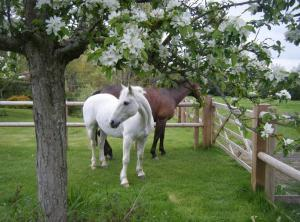 Accommodation in & around the New Forest with facilities for horses & ponies