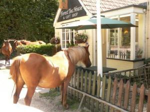 Pet Friendly B&Bs in the New Forest