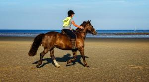 Horse Riding on the Isle of Wight at Bembridge