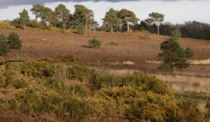 Holt Heath National Nature Reserve