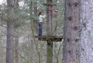 Go Ape treetops course in Ringwood Forest