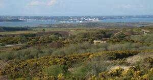 Heathland & Coastal views around Studland