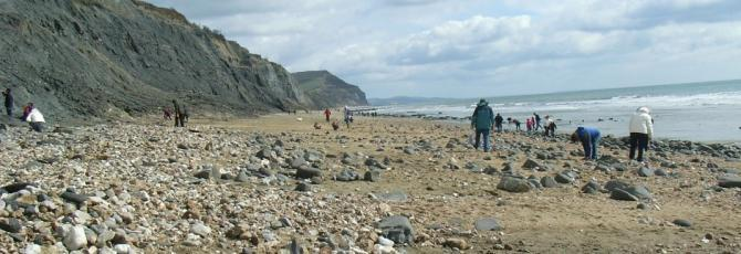 Searching for Fossils on Charmouth Beach