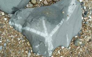 Finding Fossils on Charmouth Beach