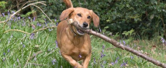 Pet Friendly Holidays in Cornwall