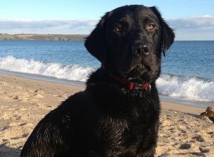Pet friendly accommodation near dog friendly beaches