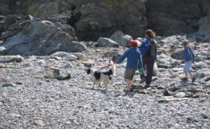 Dog friendly beaches in St Agnes