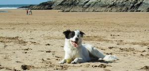 Paws on the shores - Dog friendly beaches & accommodation - Newquay Coast