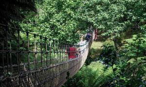 Britain's longest rope bridge in The Jungle at Heligan