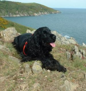 Dog Friendly B&Bs in Devon near the coast path