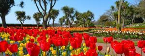 Spring at Torre Abbey Gardens