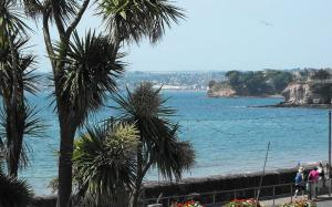 The Riviera's exotic Palm Trees in Torquay