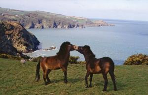 Coastal walking around North Devon's Exmoor Coast