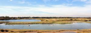 North Cave Wetlands from the panoramic viewing hide. Credit Stuart Petch
