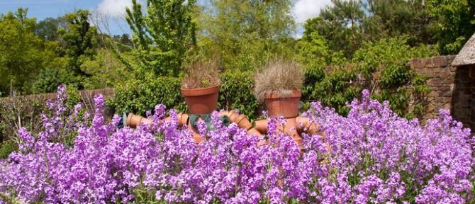 RHS Garden Rosemoor near Great Torrington