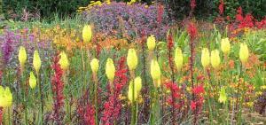 Visit RHS Garden Rosemoor in the heart of Devon