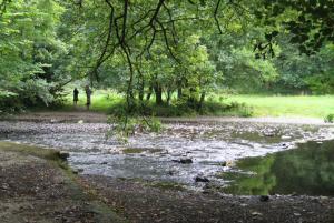 Woodland walks & riverside strolls around Okehampton Castle