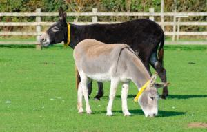 The Donkey Sanctuary at Sidmouth