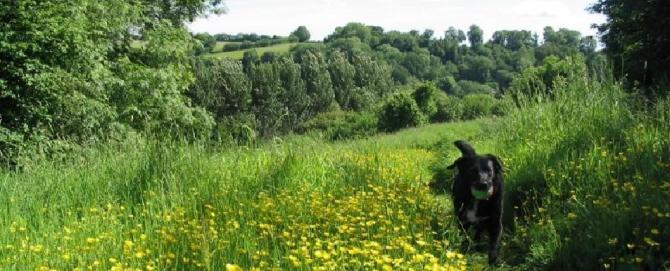 Dogs welcome at Lea Hill Cottages in the Blackdown Hills