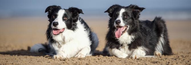 Who's For the Beach ... Dog Friendly Holidays around Britain's Coast