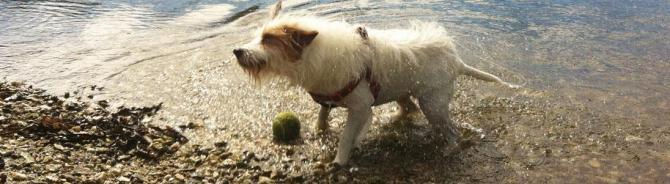 Creekside Dog Friendly Cottages in the Falmouth, Mylor, Flushing & Restronguet areas