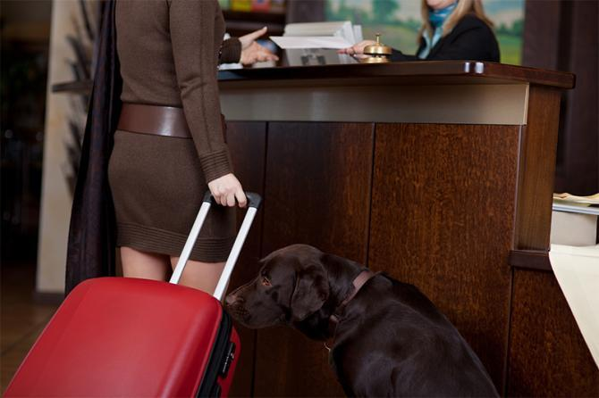 Dog Friendly Hotel UK