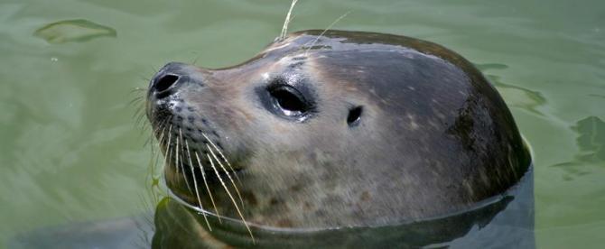 Seal at Scarborough Sea Life Centre