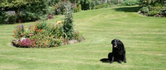 Dog Friendly Accommodation in Yorkshire