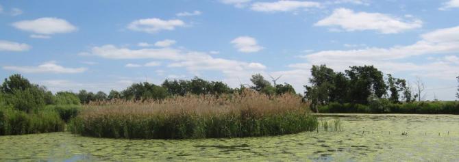 Explore the flat landscape of the Fens - Flag Fen near Peterborough, Cambridgeshire