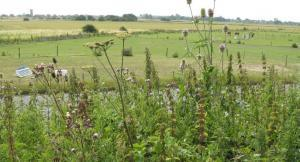 Romney Marsh - reclaimed from the sea over centuries