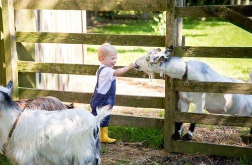 Last Minute Cottages - Tredethick Farm Cottages - Orchard S100536