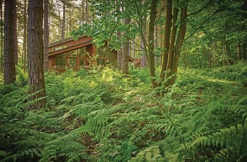 Last Minute Cottages - Exquisite Sherwood Forest Lodge S111480