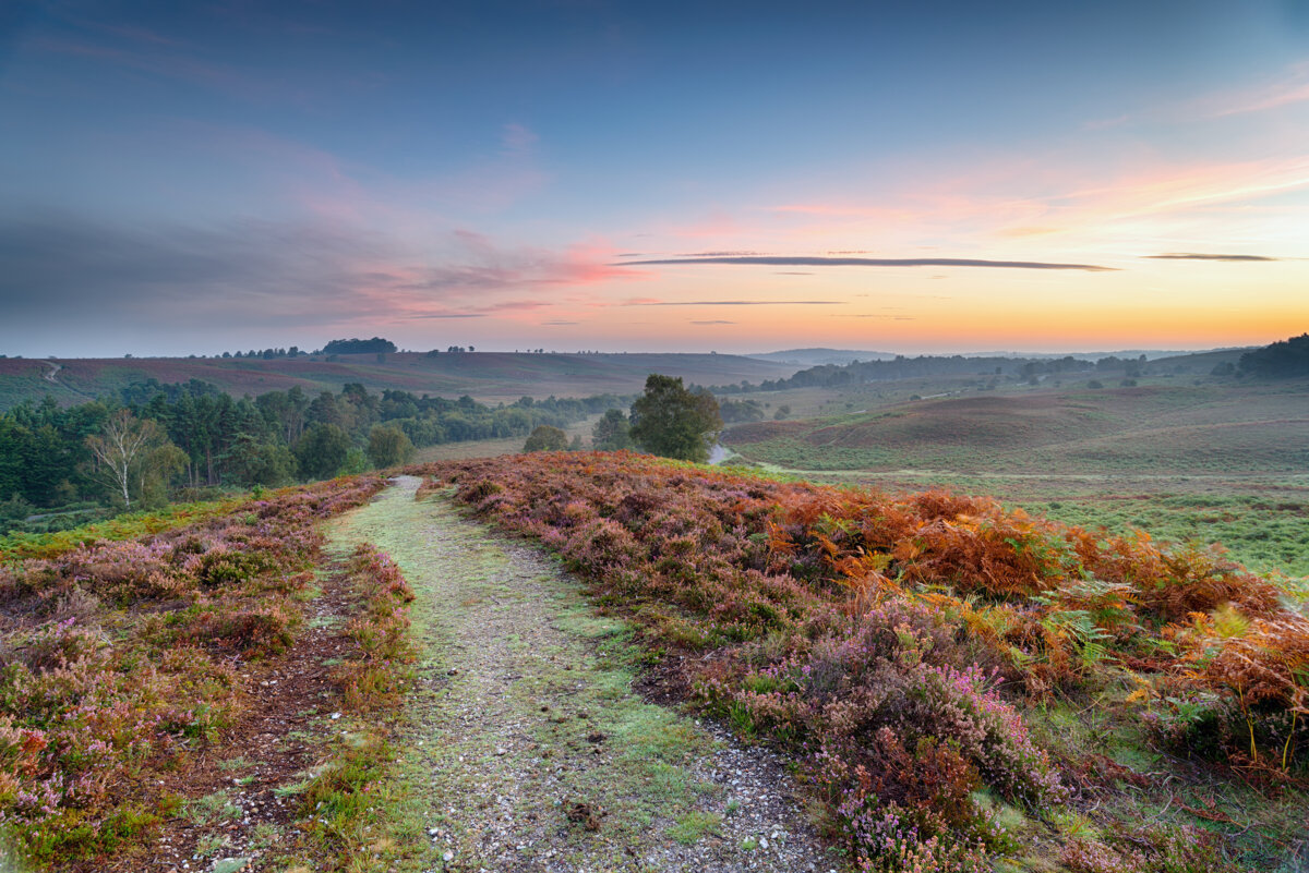 Holiday Cottages In New Forest